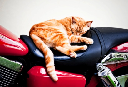 Cat bike