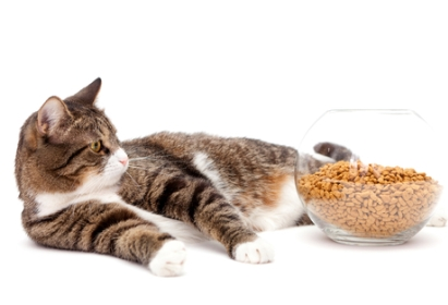 cat_food_bowl_main