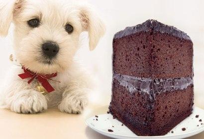 dog-eating-chocolate_resized