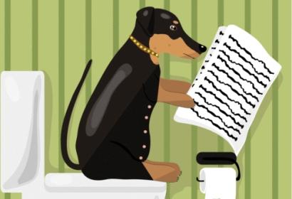 Toilet_dog
