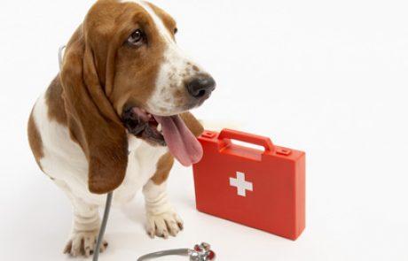 מדריך מהיר לבדיקת מדדים בכלבכם