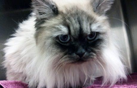 מדריך חיסון לחתולים