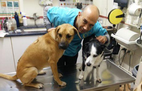טיפול בדלקת מפרקים בחיות מחמד