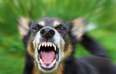 על כלבת ועל חיסון נגד כלבת