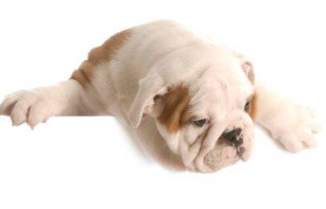 מה זה ורוד, חשוד ומבצבץ מהפה של הכלב שלכם?