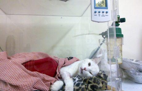 """עזרה ראשונה לכלב ולחתול – חלק ג' / ד""""ר ענת מילנר-רוטרמן"""