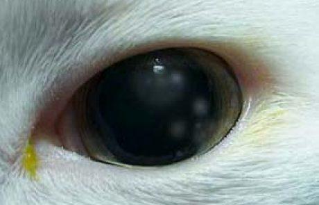 נמלי אש ברעננה גרמו למחלת עיניים נדירה