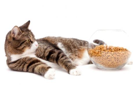 טיפול בחיות אנורקטיות – מה עושים כשהכלב או החתול מפסיקים לאכול?