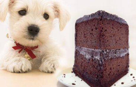 הרעלת שוקולד בכלבים