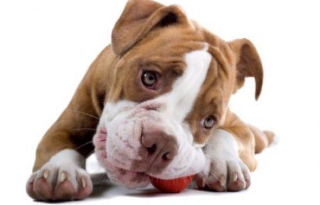 בייגלה לגורי כלבים