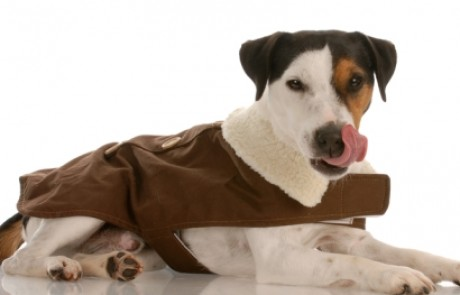 מדוע כלבים אוכלים צואה?
