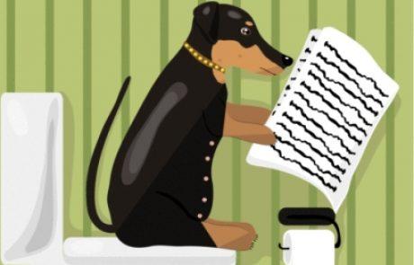 עצירות בכלבים