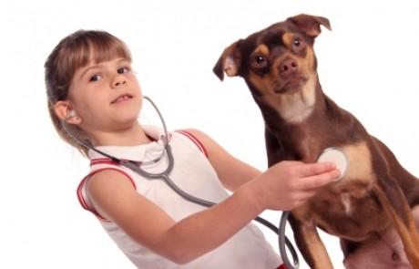 ערכים מדידים לזיהוי חירום וטרינרי אצל כלבים