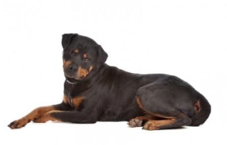 חוק הכלבים המסוכנים