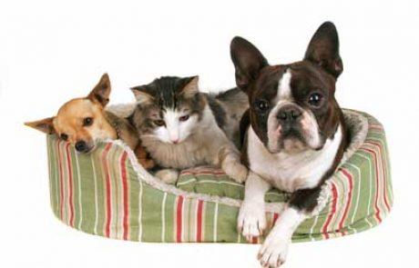חיסון לכלבים וחתולים